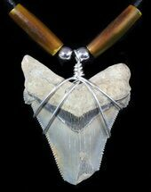 "Buy 2"" Fossil Angustiden Tooth Necklace - Megalodon Ancestor - #47785"