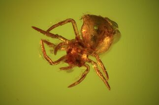 Fossil Spider (Aranea) In Baltic Amber For Sale, #48224