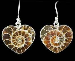 Fossil Ammonite Earrings - Sterling Silver For Sale, #48740