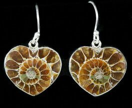 Fossil Ammonite Earrings - Sterling Silver For Sale, #48746