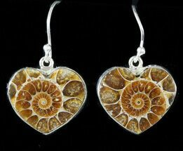 Fossil Ammonite Earrings - Sterling Silver For Sale, #48749