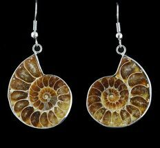 Fossil Ammonite Earrings - 110 Million Years Old For Sale, #48836