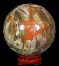 "Buy 4.6"" Colorful Petrified Wood Sphere - #49741"