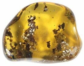 "1.4"" Polished Chiapas Amber With Inclusions - Mexico For Sale, #50804"