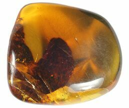 "1.4"" Polished Chiapas Amber With Inclusion - Mexico For Sale, #50807"