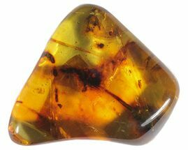 Amber - Fossils For Sale - #50808