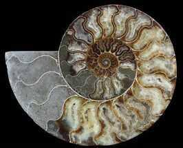 "Buy 8.8"" Cut Ammonite Fossil (Half) - Agate Preservation - #51247"