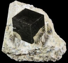 Pyrite - Fossils For Sale - #51228