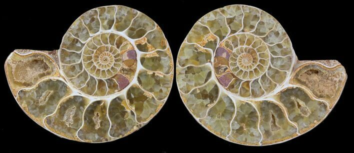 "3.2"" Cut & Polished, Agatized Ammonite Fossil - Jurassic"