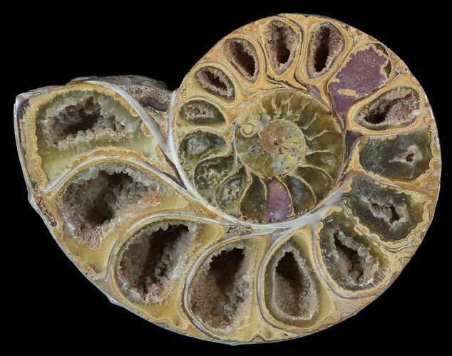 "3.3"" Sliced, Agatized Ammonite Fossil (Half) - Jurassic"