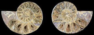 "3.1"" Cut & Polished, Agatized Ammonite Fossil - Jurassic For Sale, #53831"