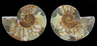 "4.7"" Polished Ammonite Pair - Agatized For Sale, #54311"