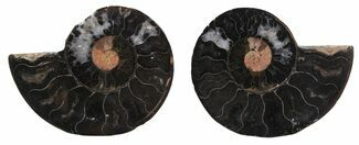 "2.5"" Split Black/Orange Ammonite Pair - Unusual Coloration For Sale, #55565"
