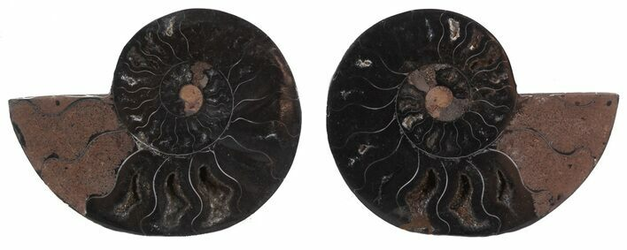 "2.8"" Split Black/Orange Ammonite Pair - Unusual Coloration"
