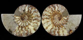 "Buy 8.1"" Cut & Polished Ammonite Pair - Agatized - #60283"