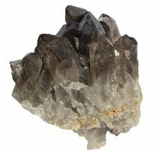"Buy 4.5"" Dark Smoky Quartz Cluster - Large Crystals  - #61498"