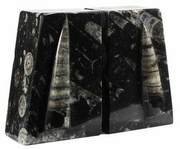 "Buy 4.6"" Polished Orthoceras Bookends - Morocco - #61333"