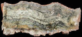 "6.3"" Strelley Pool Stromatolite - 3.43 Billion Years Old For Sale, #62738"
