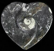 "Buy 4.5"" Heart Shaped Fossil Goniatite Dish - #61288"