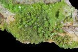 "4.3"" Pyromorphite Crystal Cluster - China - #63710-2"