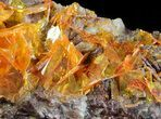 "2.8"" Bright Orange Wulfenite Cluster - Large Crystals - #39140-4"