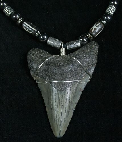 Megalodon Tooth Necklace