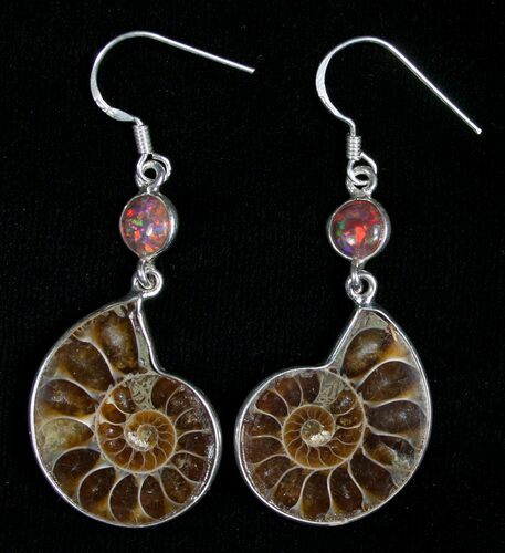 Stylish Ammonite Earrings - Sterling Silver
