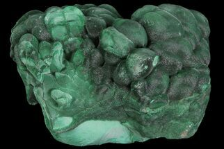 "Silky, 1.3"" Botryoidal Malachite Crystal Formation - Congo For Sale, #67454"