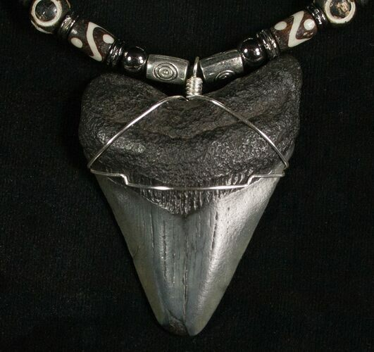 "Megalodon Tooth Necklace - 2.2"" tooth"