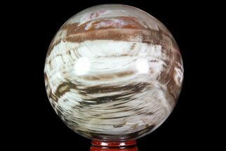 "3.4"" Colorful Petrified Wood Sphere - Madagascar For Sale, #71408"