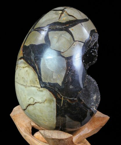 "6"" Septarian ""Dragon Egg"" Geode - Black Crystals"