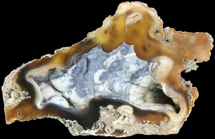 "4.1"" Unique, Agatized Fossil Coral Geode - Florida"