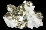 "2.6"" Gleaming Pyrite Crystal Cluster with Quartz - Peru - #72589-2"