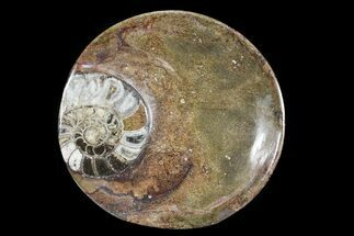 "6.8"" Round Fossil Goniatite Dish For Sale, #73991"