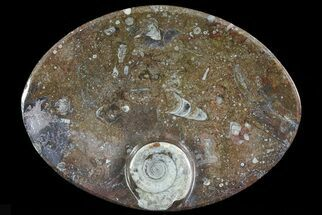 "Buy 7.8"" Oval Shaped Fossil Goniatite Dish - #73978"