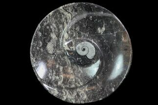 "6.2"" Round Fossil Goniatite Dish For Sale, #74003"