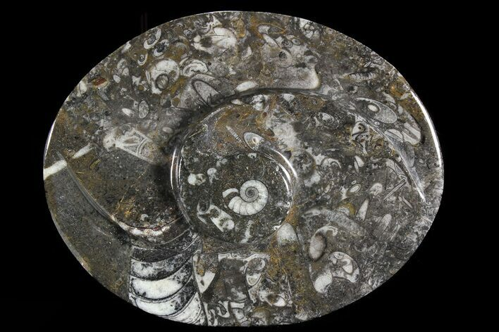 "4.7"" Oval Shaped Fossil Goniatite Dish"