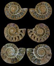 "1.5"" Jurassic Cut/Polished Ammonite Pairs - 25 Pairs For Sale, #75593"