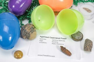 Buy Fossil Filled Easter Eggs! - 6 Pack - #75745