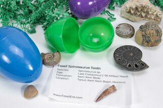 Fossil Filled Easter Eggs! - 12 Pack For Sale, #75746