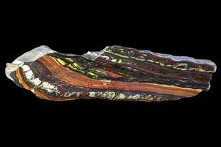 "Buy 5.1"" Polished Tiger Iron Stromatolite - (2.7 Billion Years) - #75853"