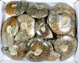 Buy Wholesale Lot: 25 Lbs Beautiful Polished Ammonites - 18 Pieces - #76996