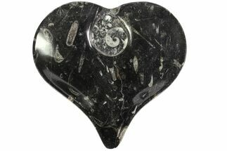 "Buy 7.8"" Heart Shaped Fossil Goniatite Dish - #77680"