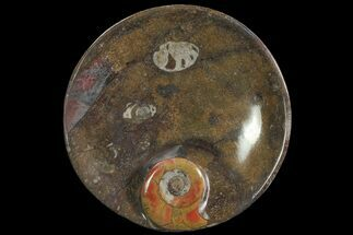 "6.8"" Round Fossil Goniatite Dish For Sale, #77690"