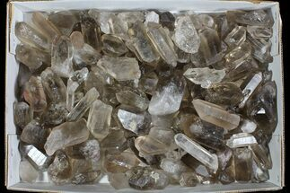 Quartz var Smoky - Fossils For Sale - #77823