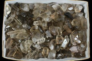 "Lot: 23 Lbs Smoky Quartz Crystals (2-4"") - Brazil For Sale, #77825"