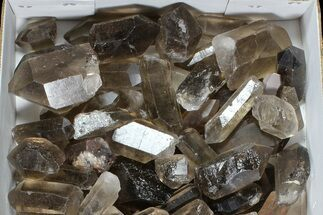 "Wholesale Lot: 20.5 Lbs Smoky Quartz Crystals (2-4"") - Brazil For Sale, #77843"