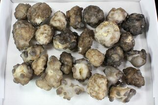"Wholesale Lot: 2-3"" Chalcedony Nodules - 27 Pieces For Sale, #78044"