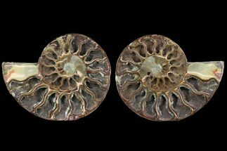 "4.4"" Cut & Polished Ammonite Pair - Agatized For Sale, #78554"