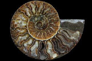 "4.9"" Agatized Ammonite Fossil (Half) - Madagascar For Sale, #78602"